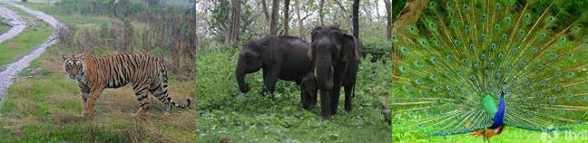 Bandipur Wildlife Sanctuary