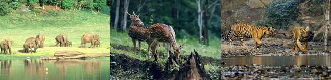 Kerala Wildlife Sanctuary