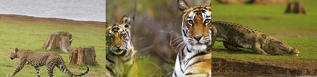 Nagarhole Wildlife Sanctuary