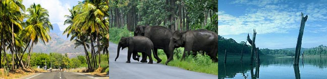 Periyar Travel