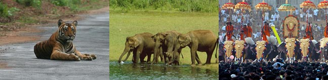 South India wildlife & cultural tour